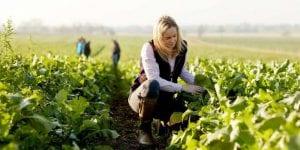 Kinh nghiệm lao động Canada cho người mới xuất khẩu lao động