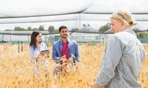 Lao động phổ thông Canada trong lĩnh vực nông nghiệp