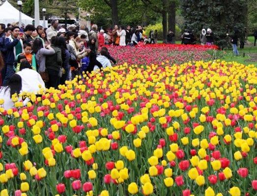 Có rất nhiều lễ hội diễn ra hàng năm ở Canada