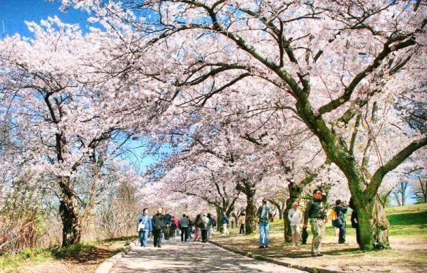 mùa xuân Canada