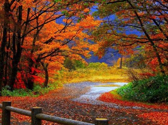 Mùa thu ở Toronto Canada tràn ngập lá phong đỏ