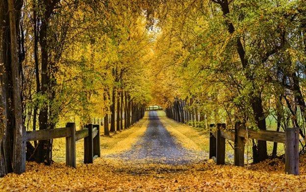 Các mùa ở New Zealand và điểm đặc trưng của từng mùa