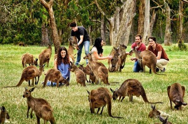 Vườn thú Perth là nơi sinh sống của nhiều loài động vật quý hiếm
