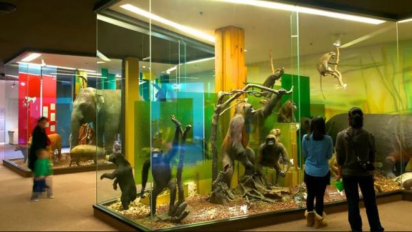 Tham quan Bảo tàng Nam Úc