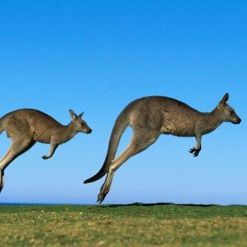 biểu tượng nước Úc