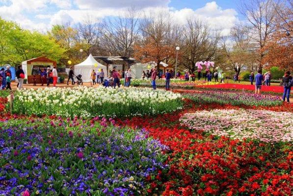 Lễ hội hoa Floriade - Công viên Commonwealth