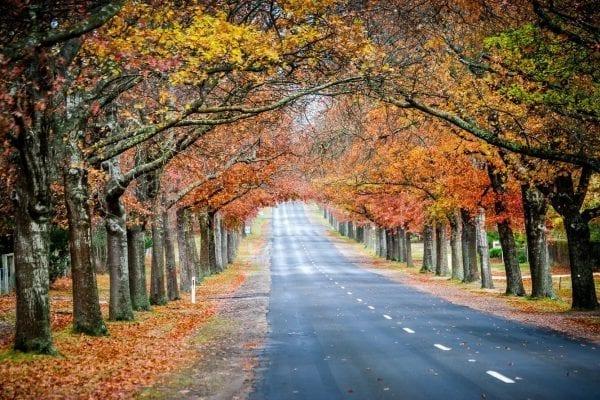 Mùa thu cả đất nước trở nên lãnh mạng và thơ mộng hẳn ra