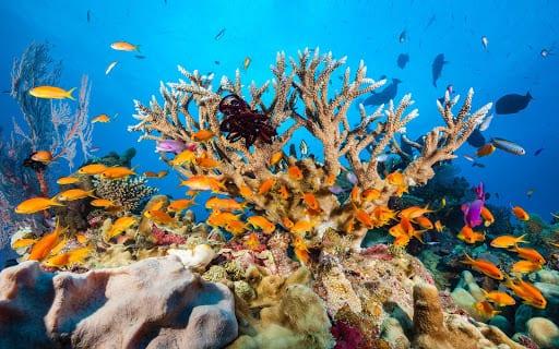 Ngắm rạn san hô đỉnh nhất nước Úc