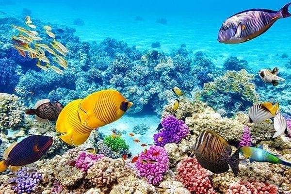 Brisbane - Thành phố có rặng san hô lớn nhất thế giới