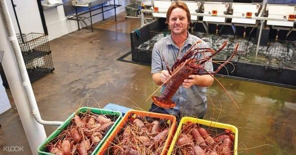 Tôm hùm đá là món ăn hải sản nổi tiếng nhất ở Tây Úc