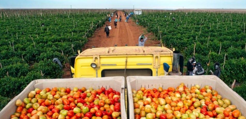 nông nghiệp úc, đi úc làm nông nghiệp 2021, làm nông nghiệp ở úc, việc làm nông nghiệp tại úc, làm nông nghiệp tại úc, nông nghiệp ở úc, nông nghiệp tại úc, đi làm nông nghiệp tai úc, ngành nông nghiệp úc, ngành nông nghiệp ở úc, nông nghiệp của úc