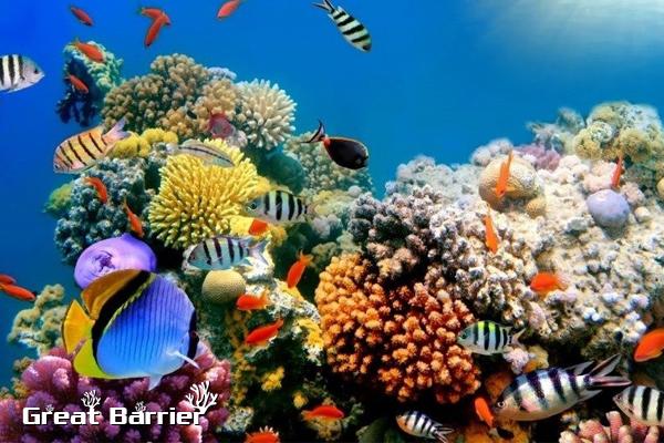 great barrier reef, great barrier reef australia, great barrier reef ở đâu, great barrier reef là gì, the great barrier reef là gì, rặng san hô great barrier, rặng san hô, rạn san hô great barrier, rặng san hô lớn nhất thế giới, great barrier, rạn san hô lớn nhất thế giới, rạn san hô đẹp nhất thế giới